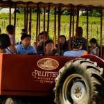 Tour at Pillitteri Estate Winery